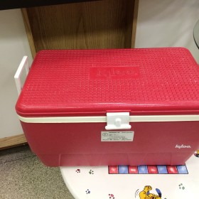 paulette red igloo cooler